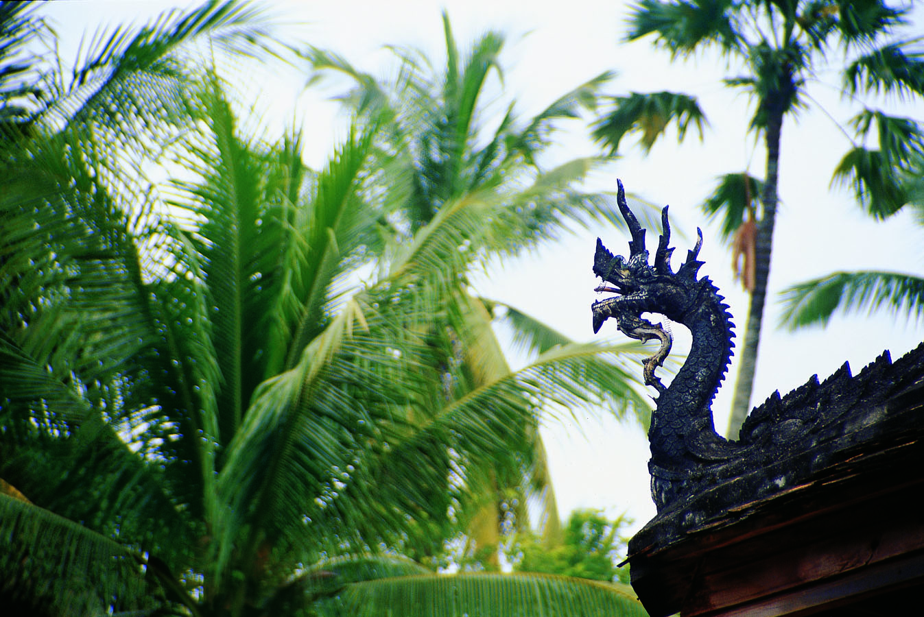 As one travels northward through Laos towards China, the snake-form of Southeast Asia seems to transmute ('grows legs')into the dragon-form of North Asia. The mid-way point is where the beliefs of the community change, having been influenced either by Southeast Asia/India or China. Photo: Vientiane, Laos