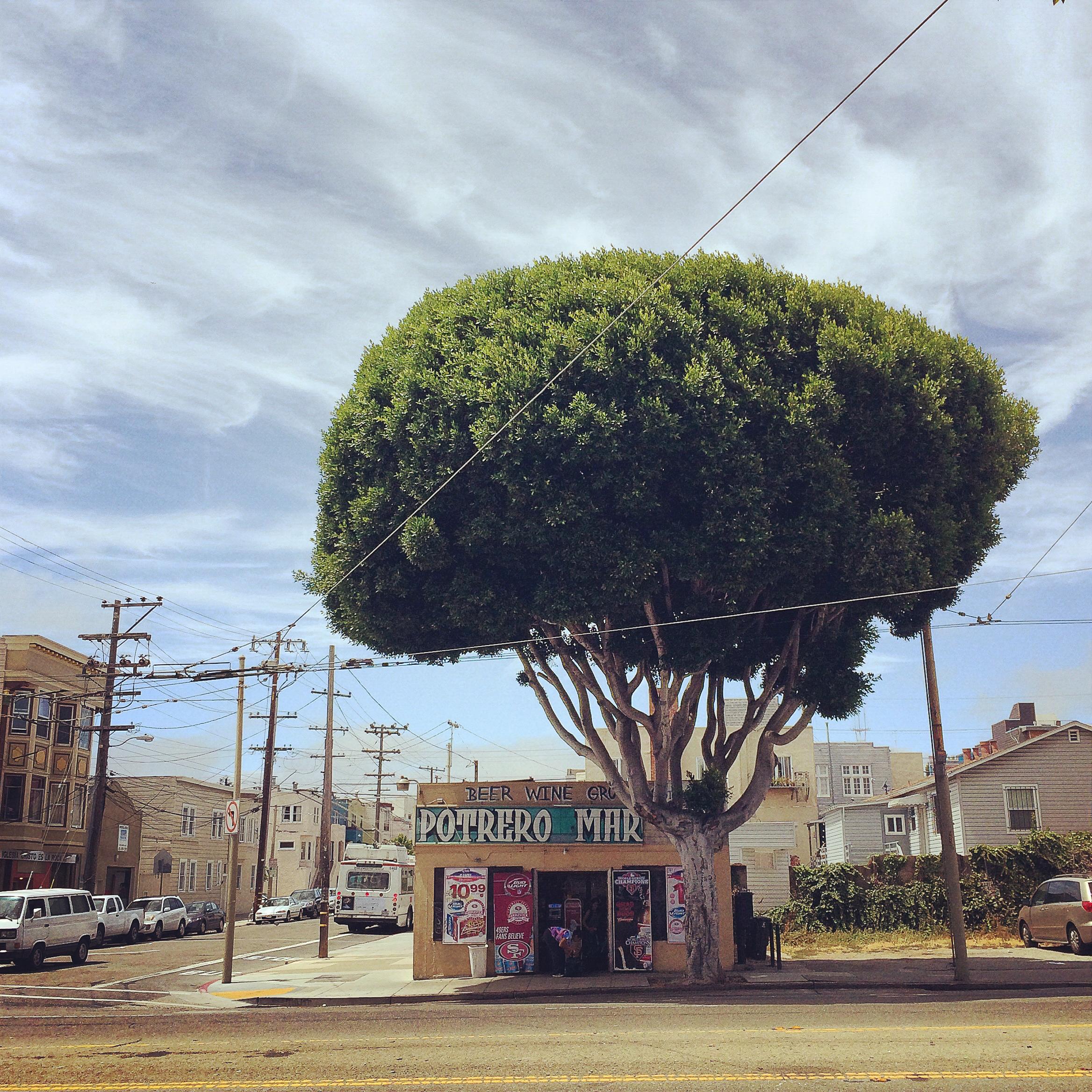 Big tree, little Potrero Market. San Francisco, CA.