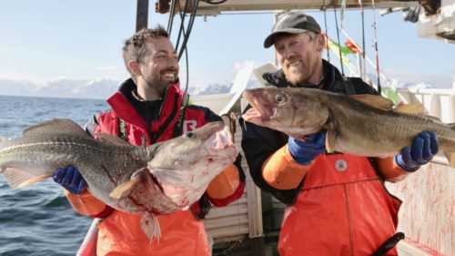 Derek-Cod-fishing-cGenepool2017-16x9-500x281.jpg