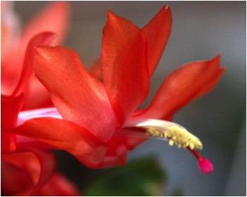 Hummingbird Cactus.jpg