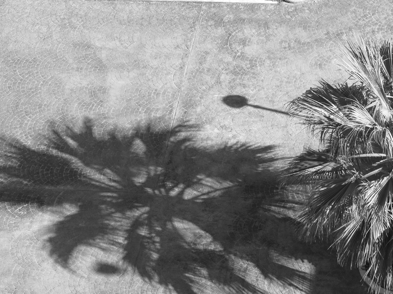 palmenschatten.JPG