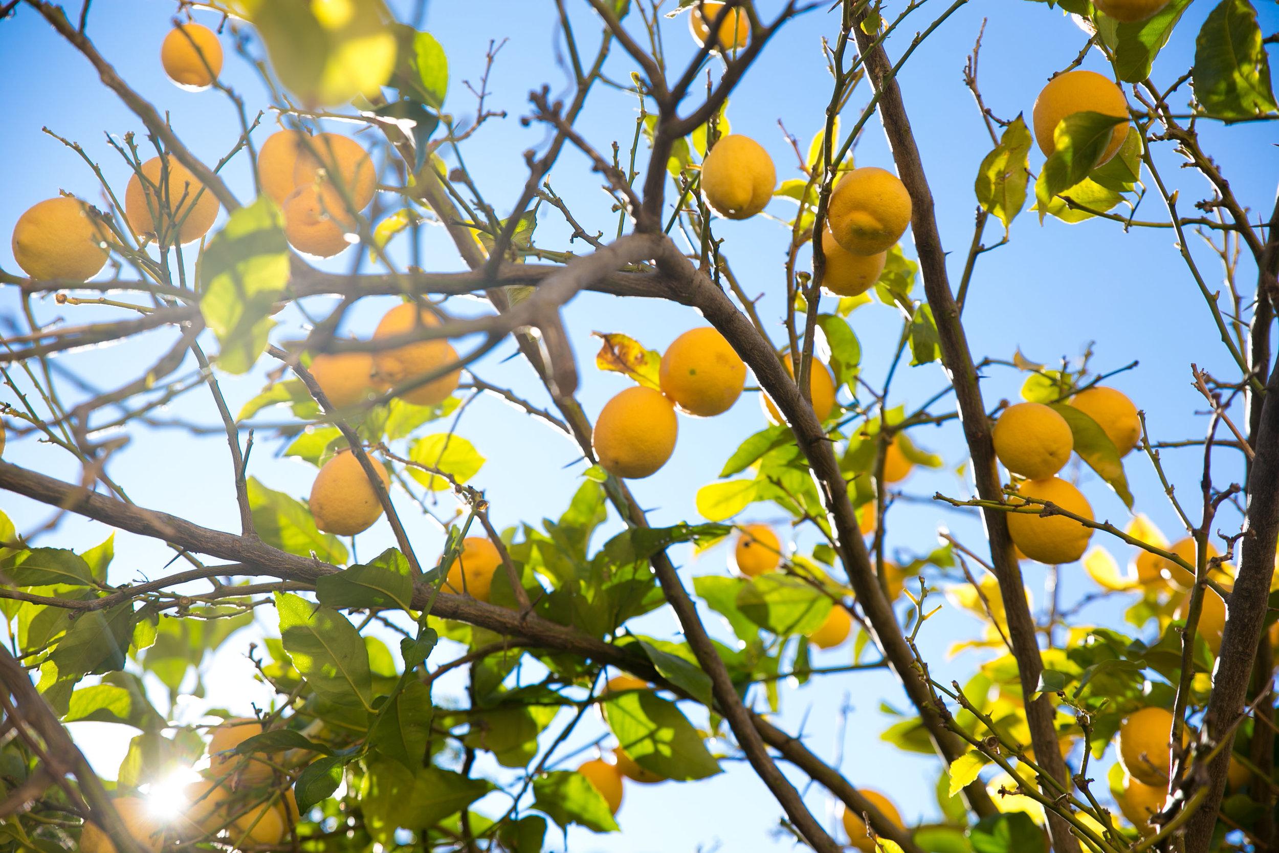 citroner valldemossa.jpg