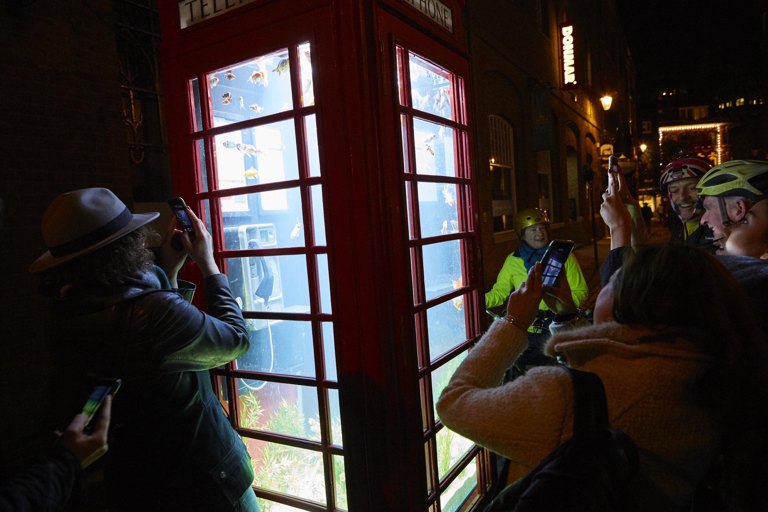 Ett akvarium i telefonkiosken! Fram med mobilkamerorna! Projicering av Benedetto Bufalino och Benoit Deseille i en traditionell, röd telefonkiosk.