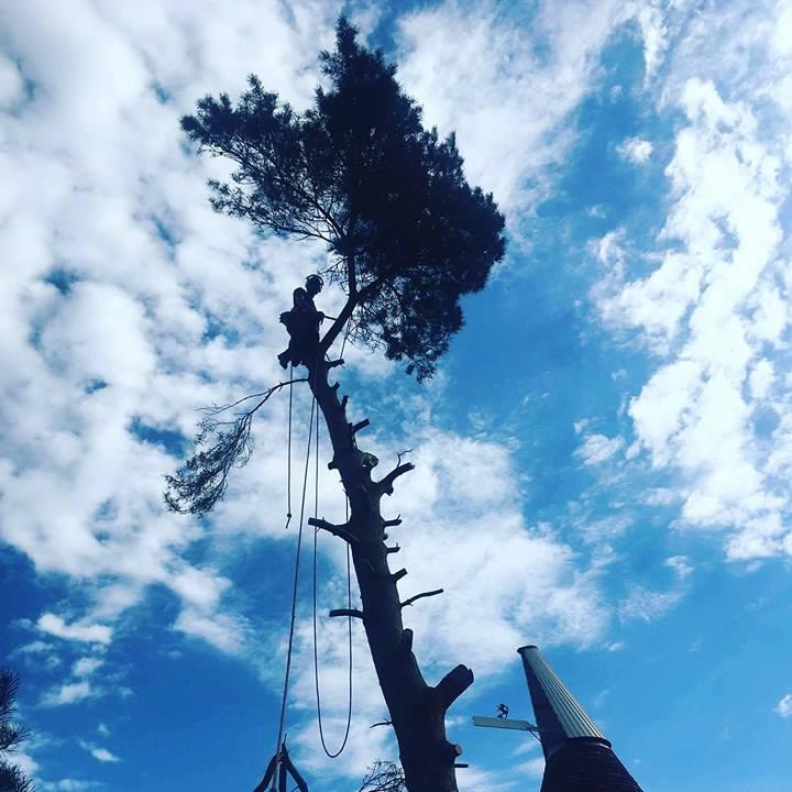 tree takedown