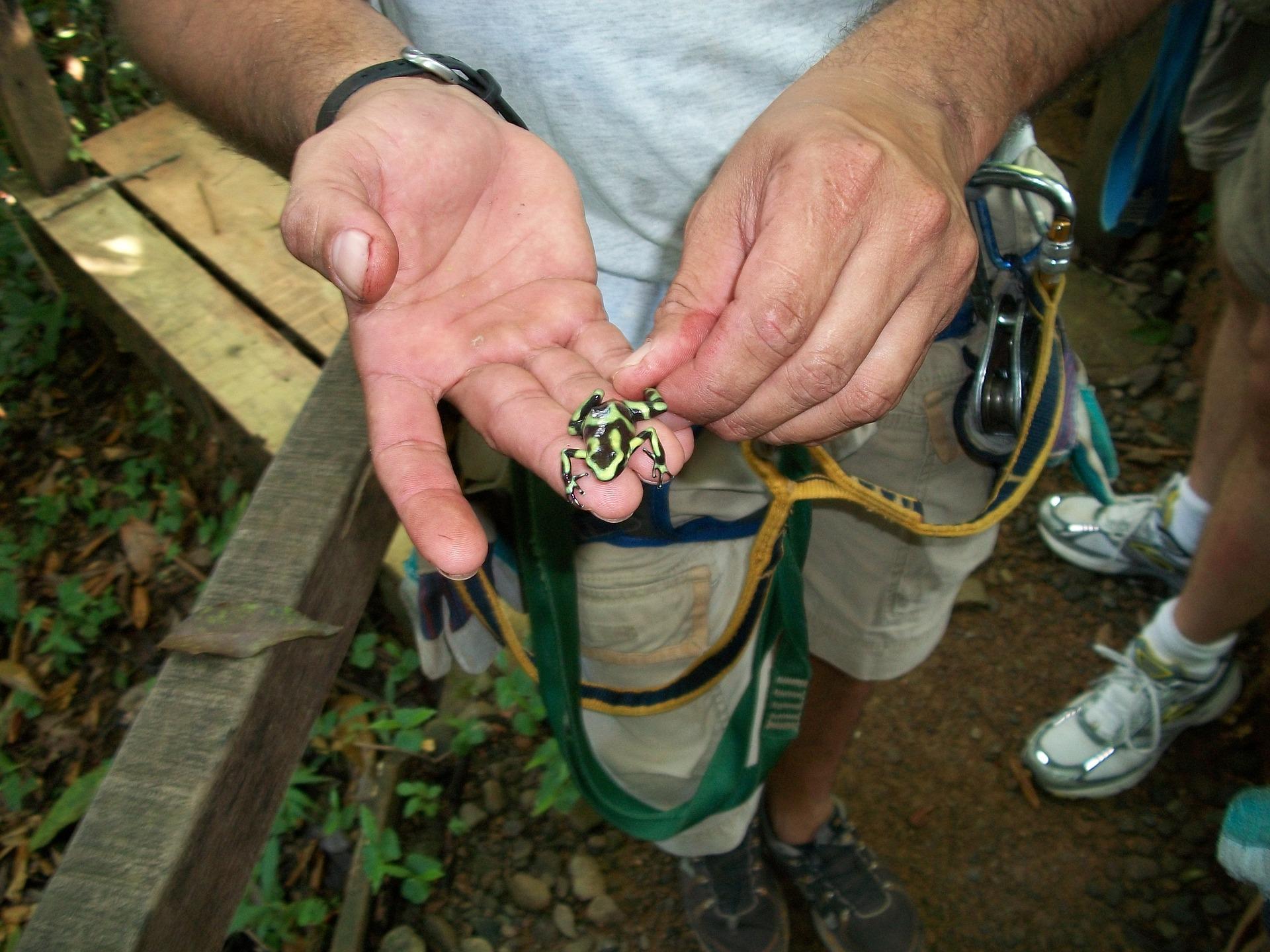 IG Scholar_Costa Rica Frog.jpg