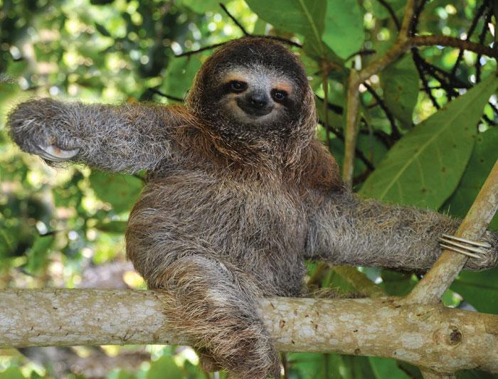 costa_rica_sloth_21.jpg