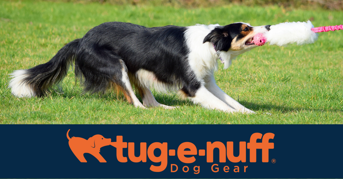 Some of the best dog-training toys in the biz - Press this button to get free delivery