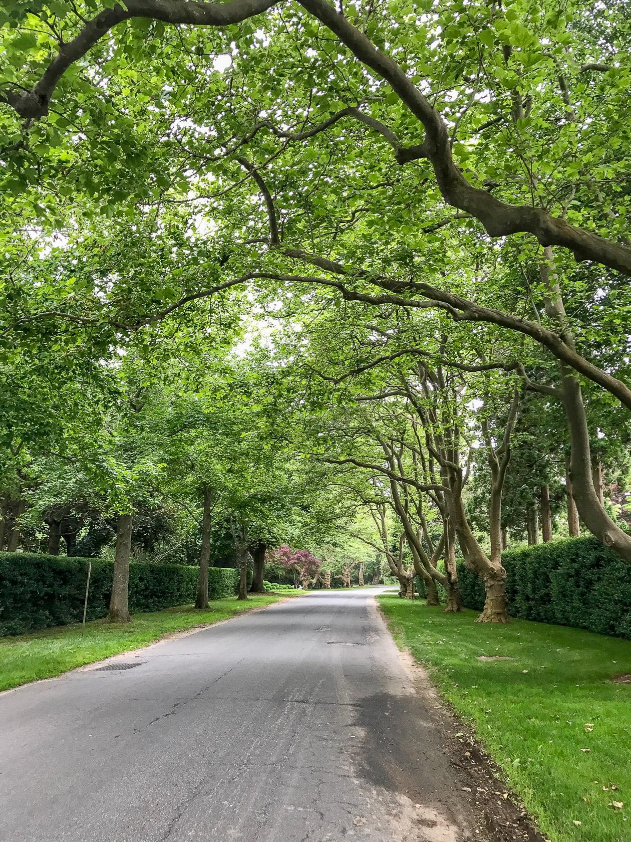 Tree lined street of my dreams!