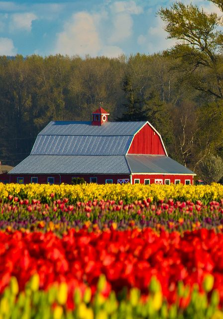 Skagit Valley Tulip Festival, Washington