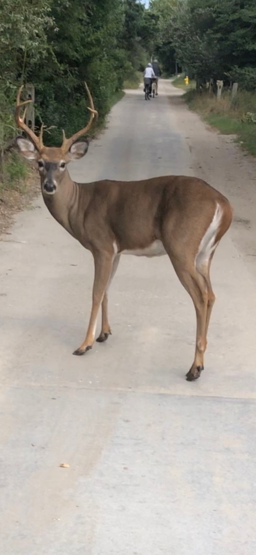 Horns in the Bike Lane -