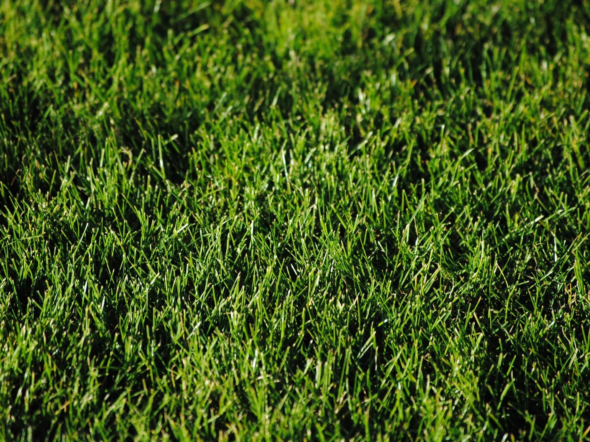 Pleje af ny græsplæne -