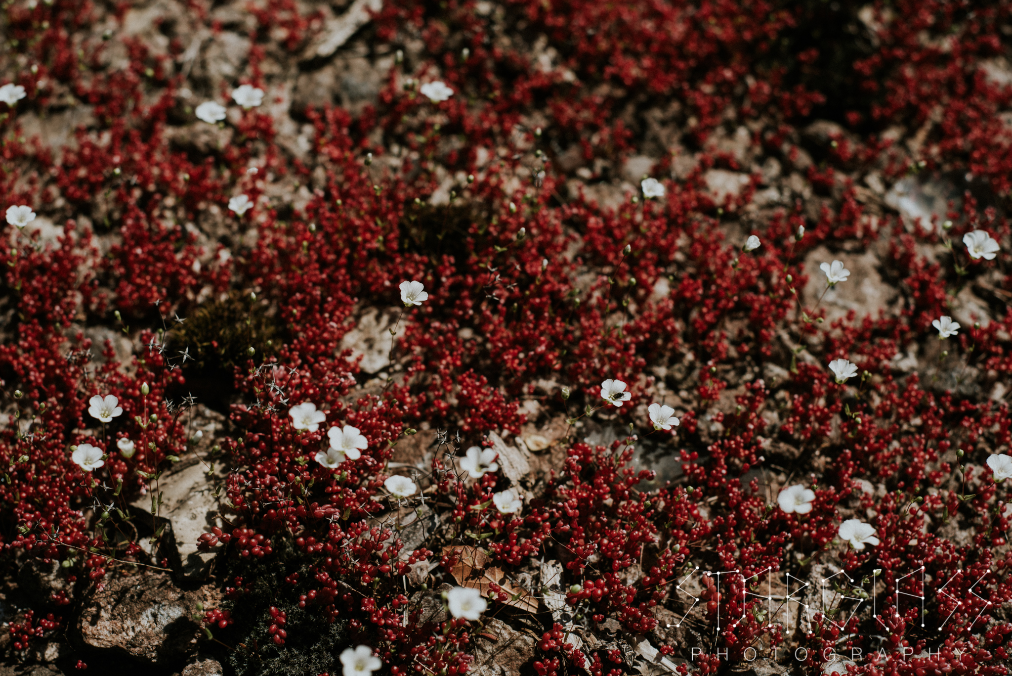 Tiny red and white blooms.