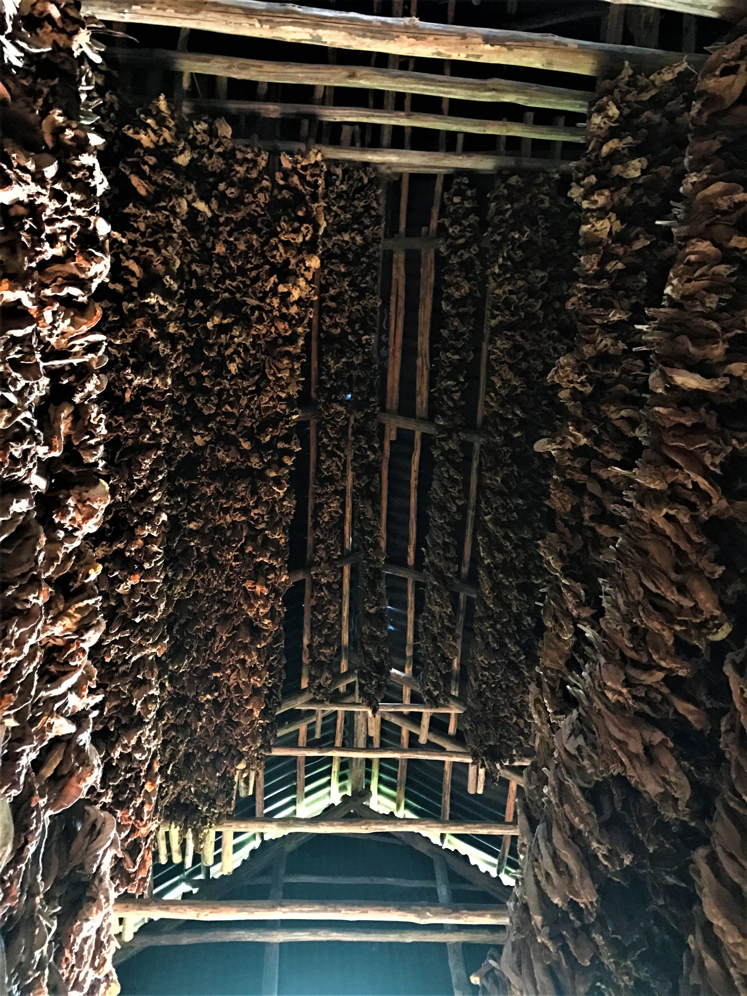 Taken inside a hut built specifically for dehydrating tobacco leaves.