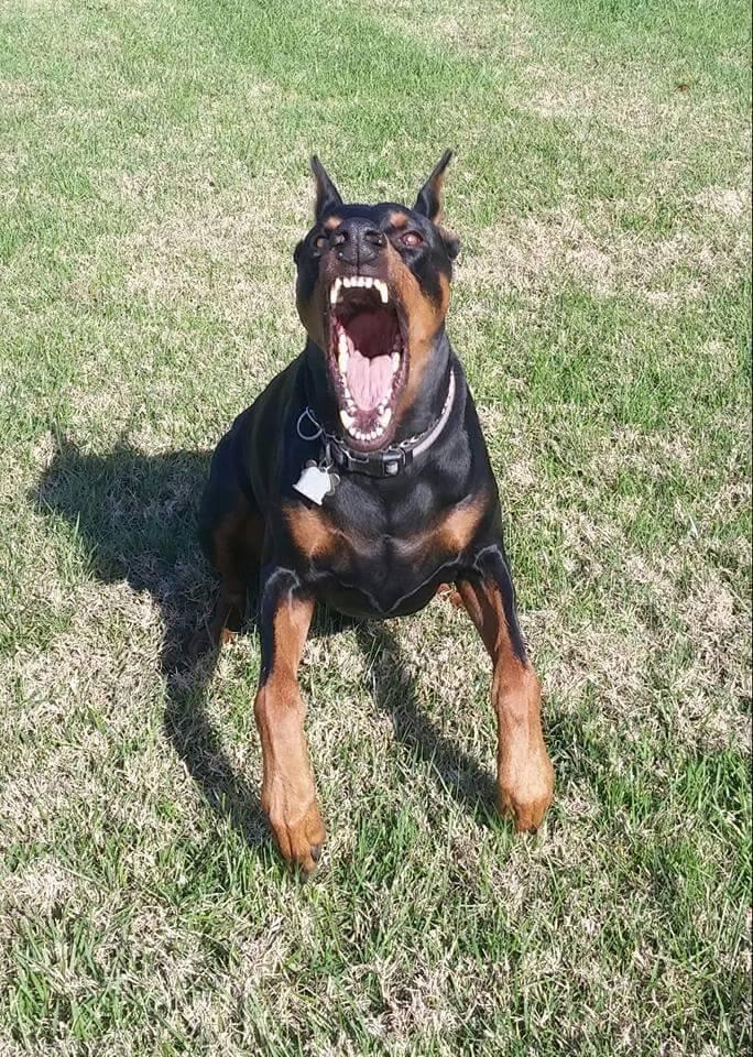 Dog Aggression.jpg