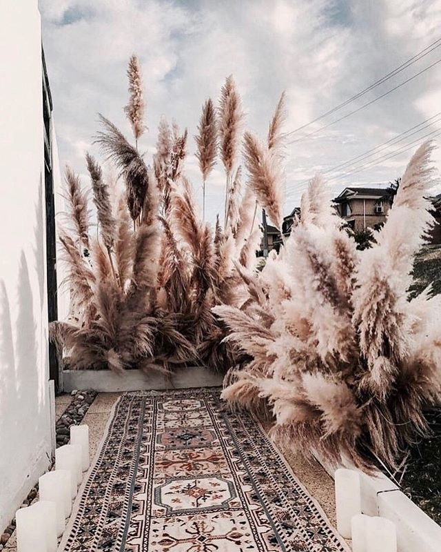 This gorgeous @pampaspeople photo has me super excited about my preordered Pampas Grass 😁 with @piece_and_pollen ✨ Excited to see what else they have at their pop up shop this week! . . . . #pampasgrass #interiorinspo #interiorstyling #designlove #details