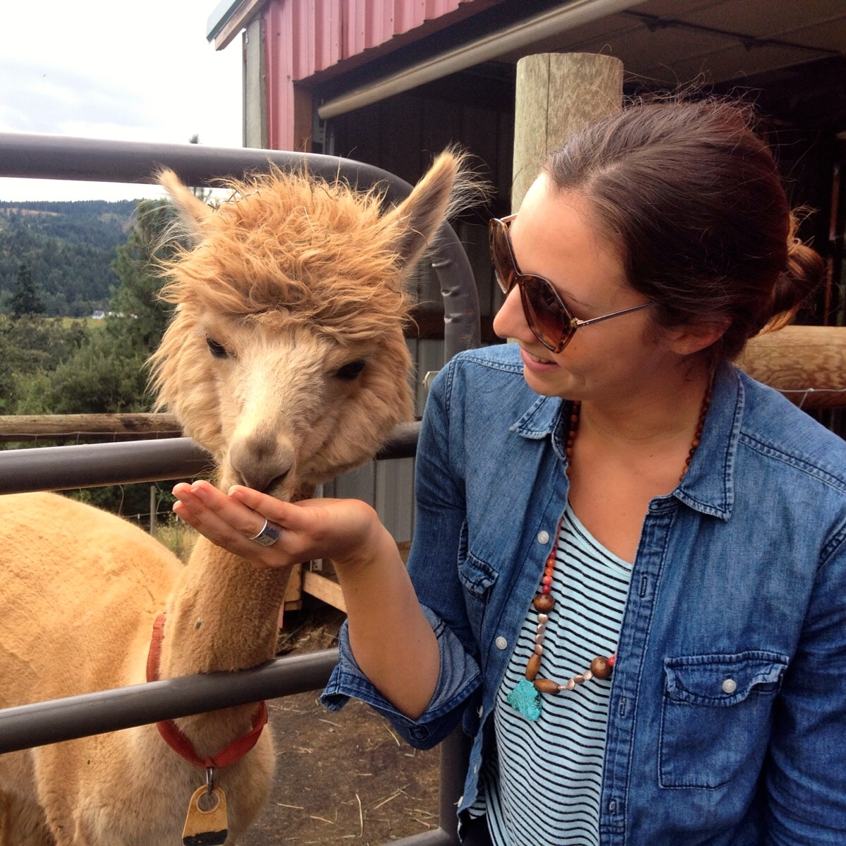Cascade Alpaca Farm, Hood River OR
