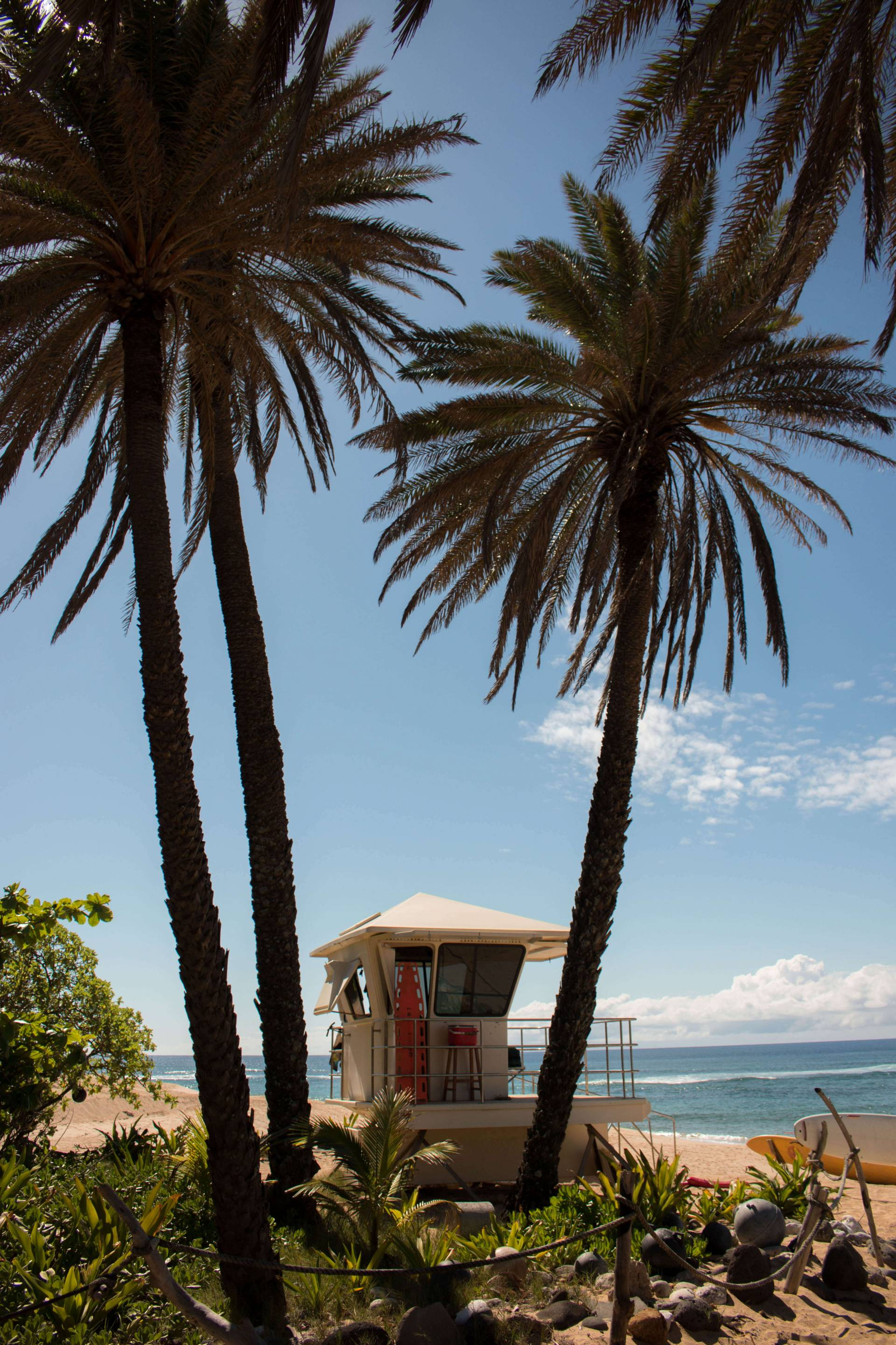 lifeguard tower surrounded by palm trees on sunset beach, oahu, hawaii