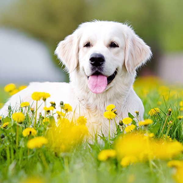 dog for website.jpg