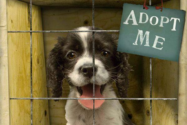 Adopt a Pet -