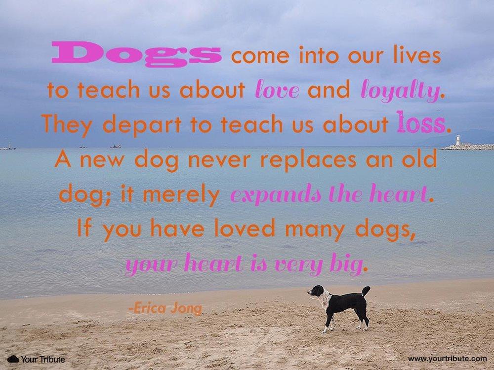 Inspirational Pet Loss Quotes — ACP