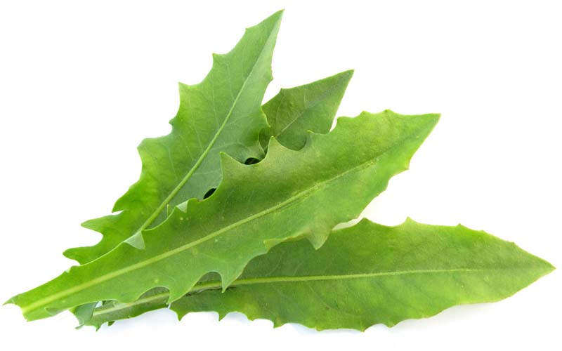 Dandelion Leaf:  Detoxifies the kidneys and liver, Safe diuretic that replaces lost potassium
