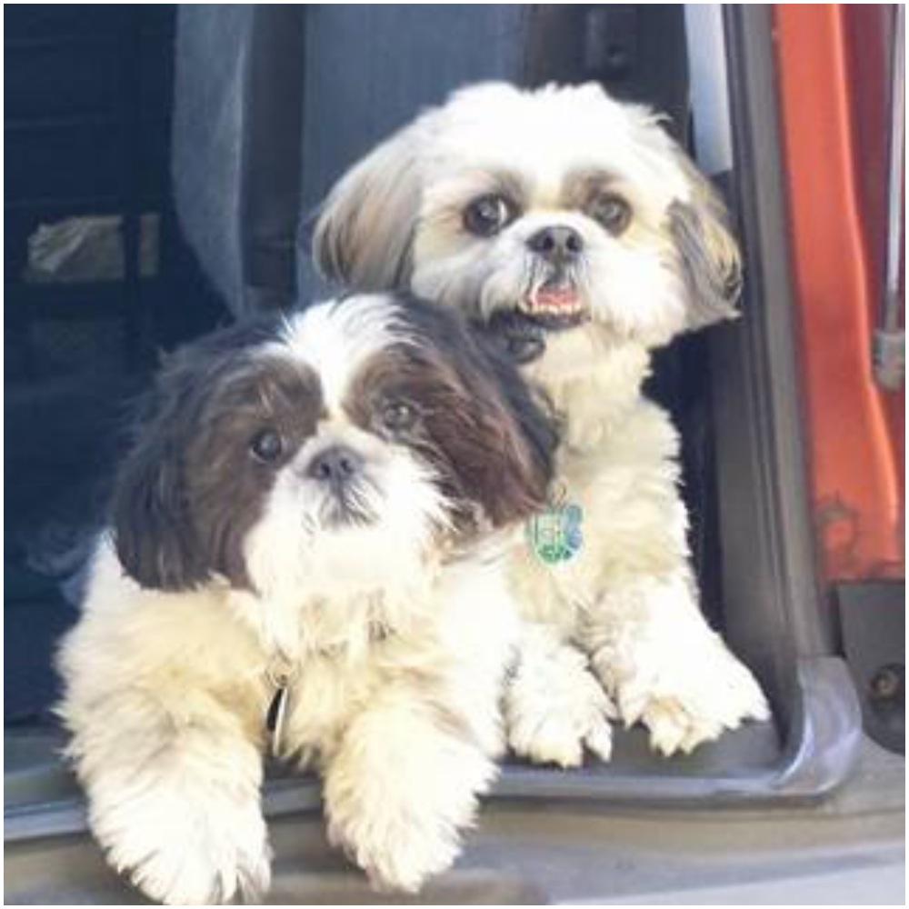 Oscar & George