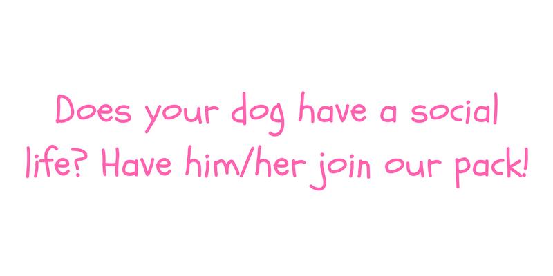 Dog Social Life.png