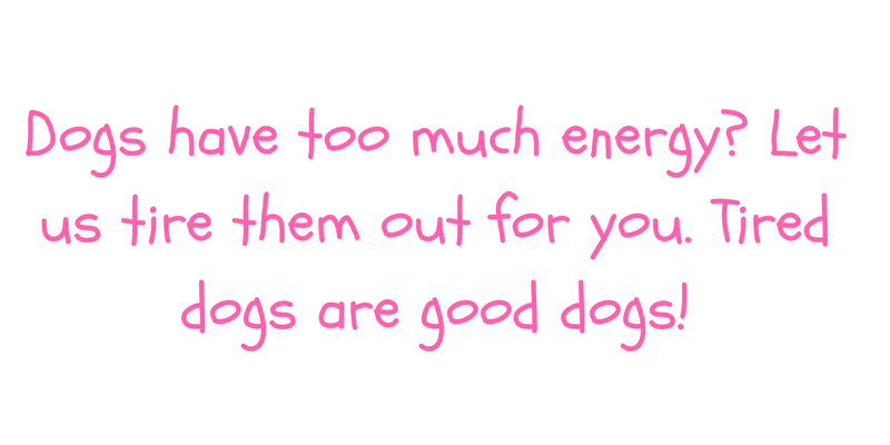 Energetic Dogs.png