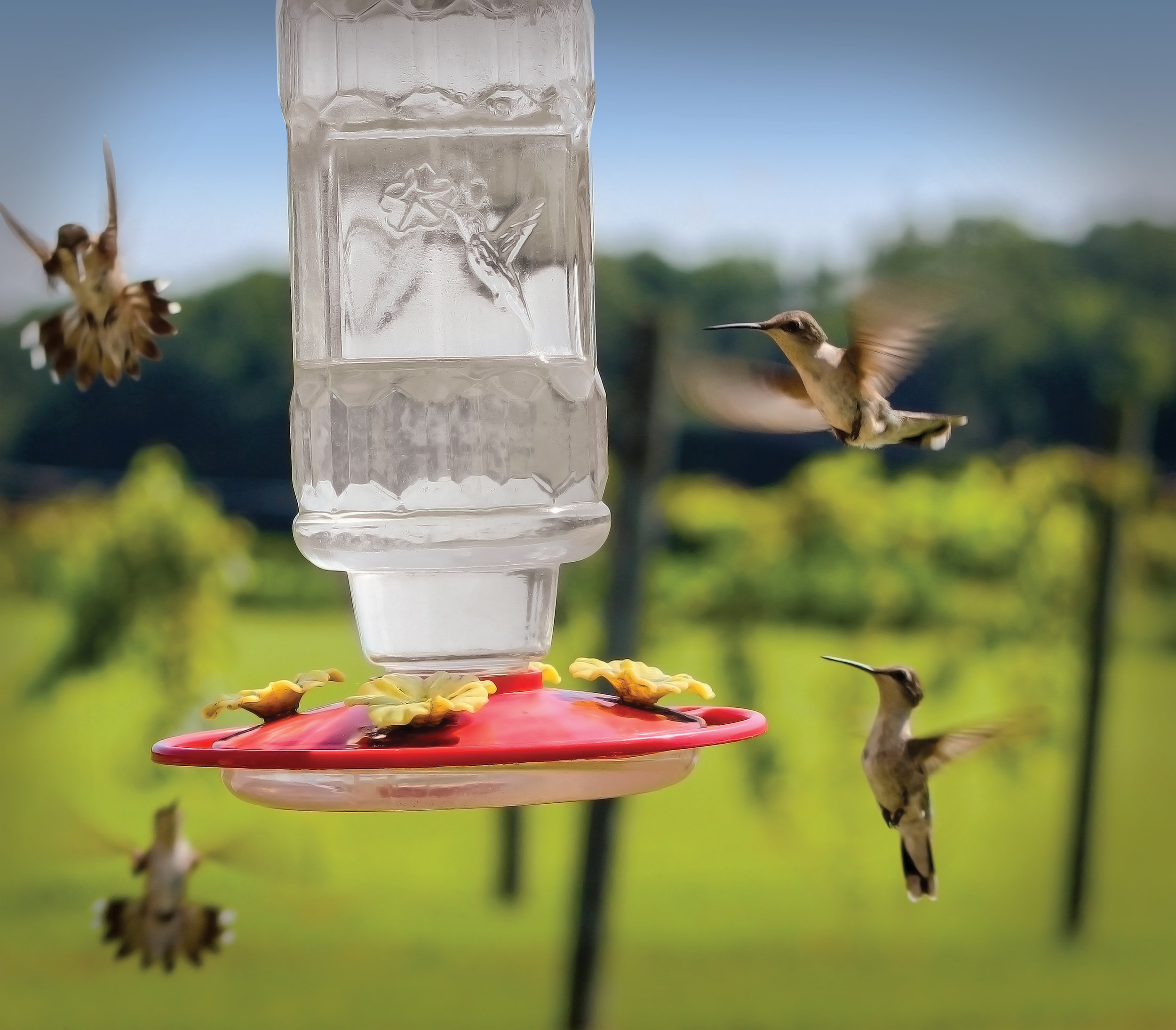 Humming birds.jpg