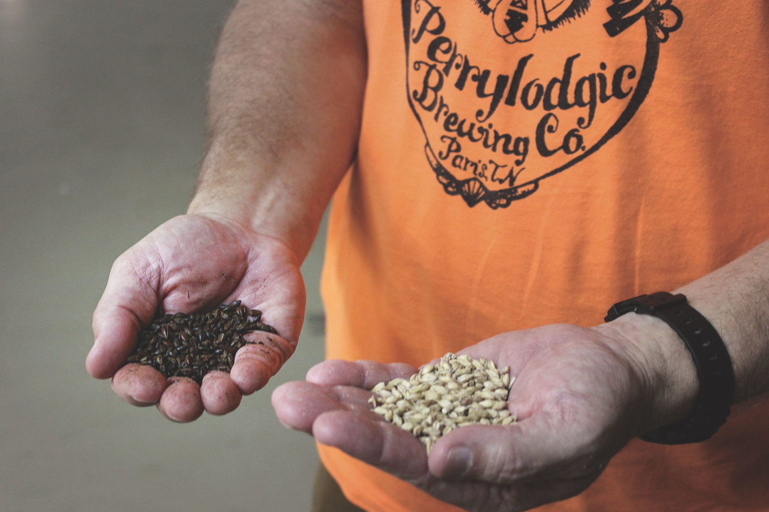 A handful of beautiful, amber hops that will be used to make one-of-a-kind beer.