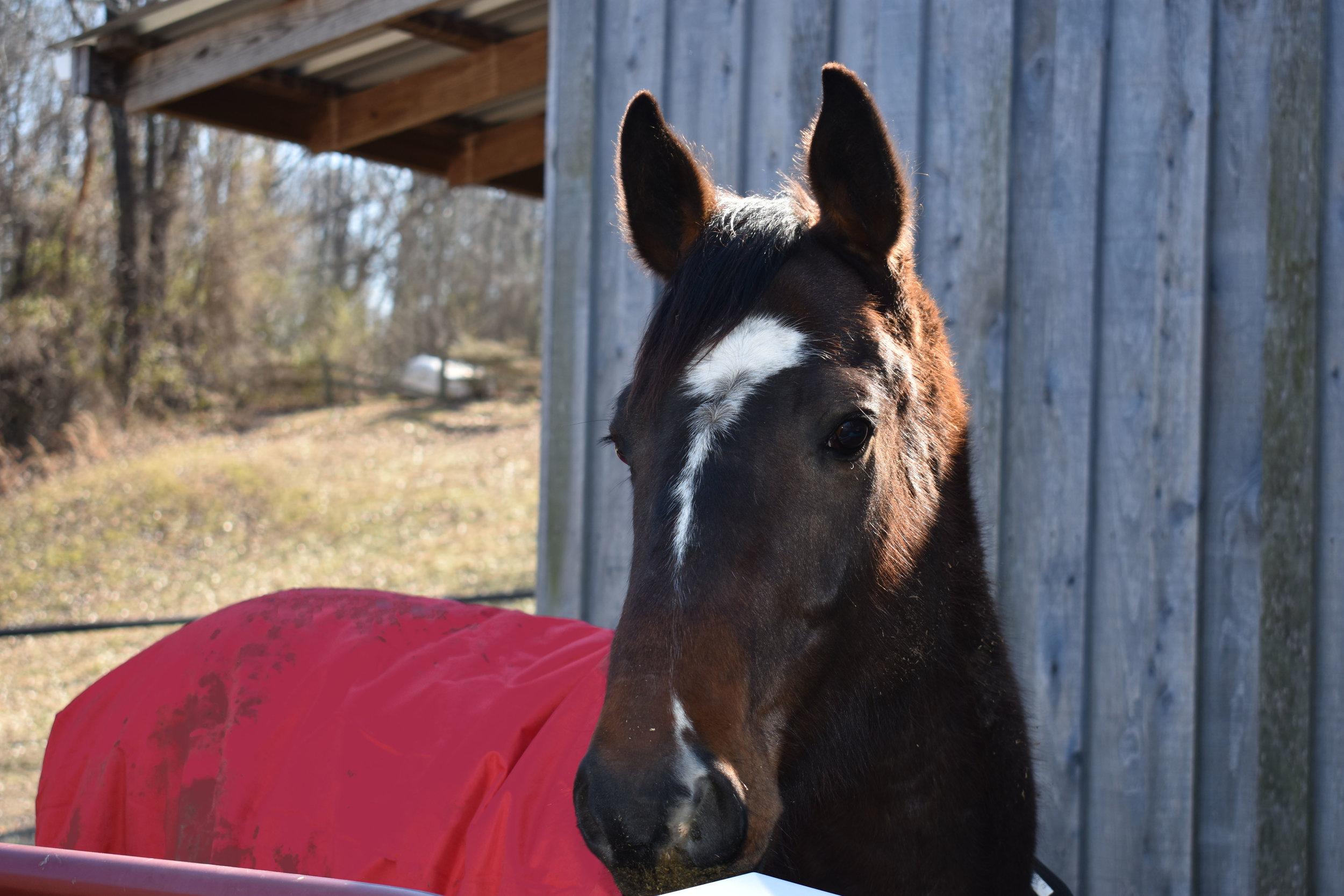 horse (2).jpg