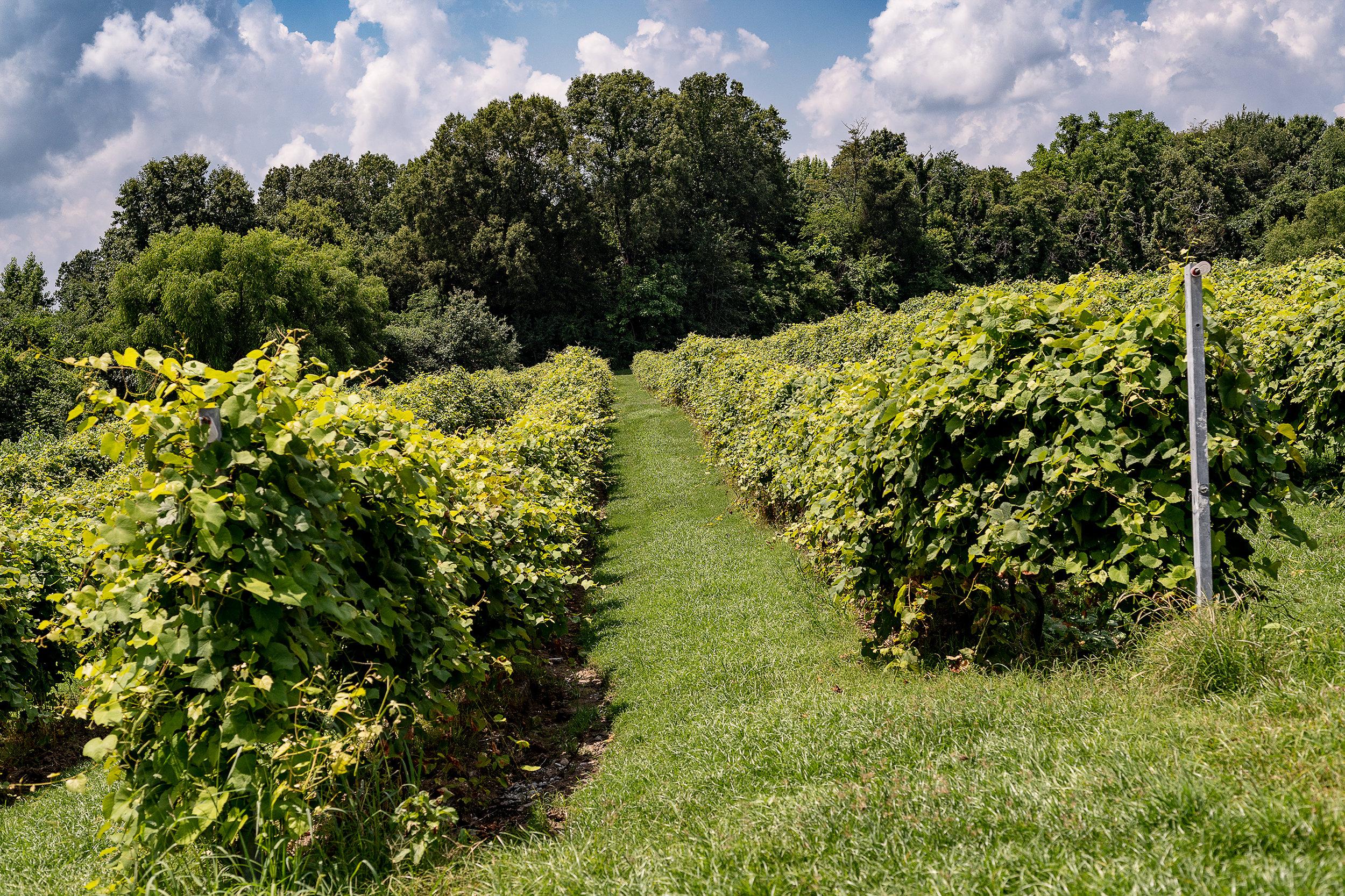 Crown Winery056.jpg