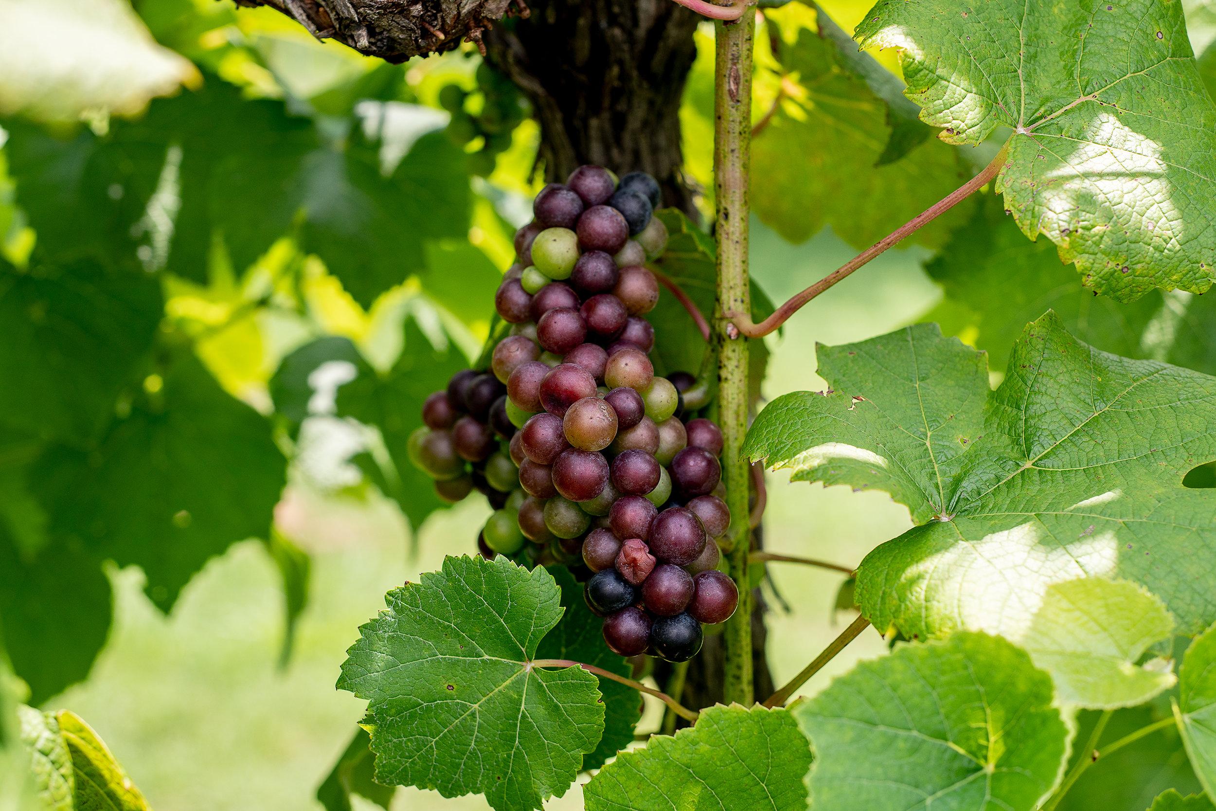 Crown Winery075.jpg