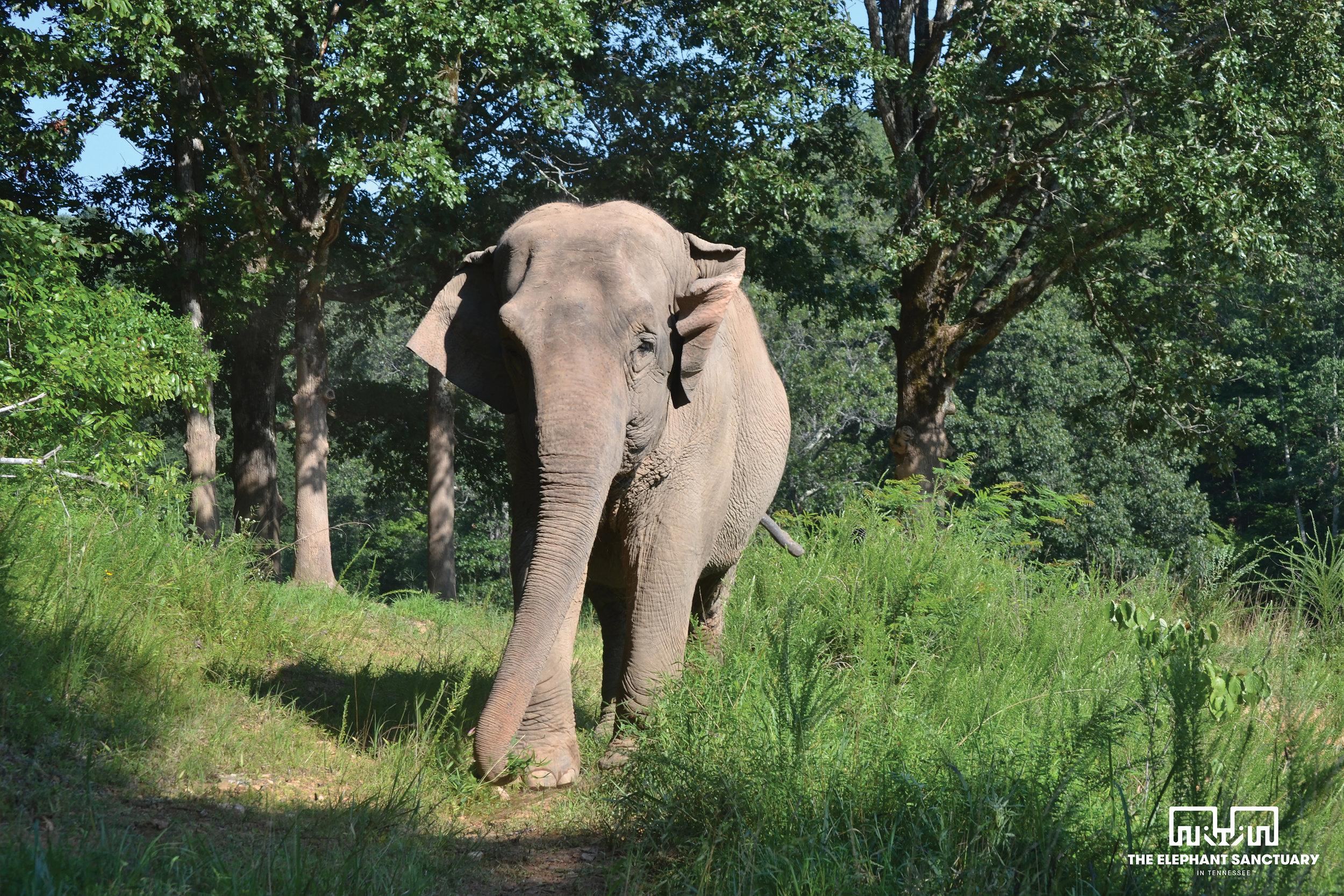 Debbie (Asian Elephant)