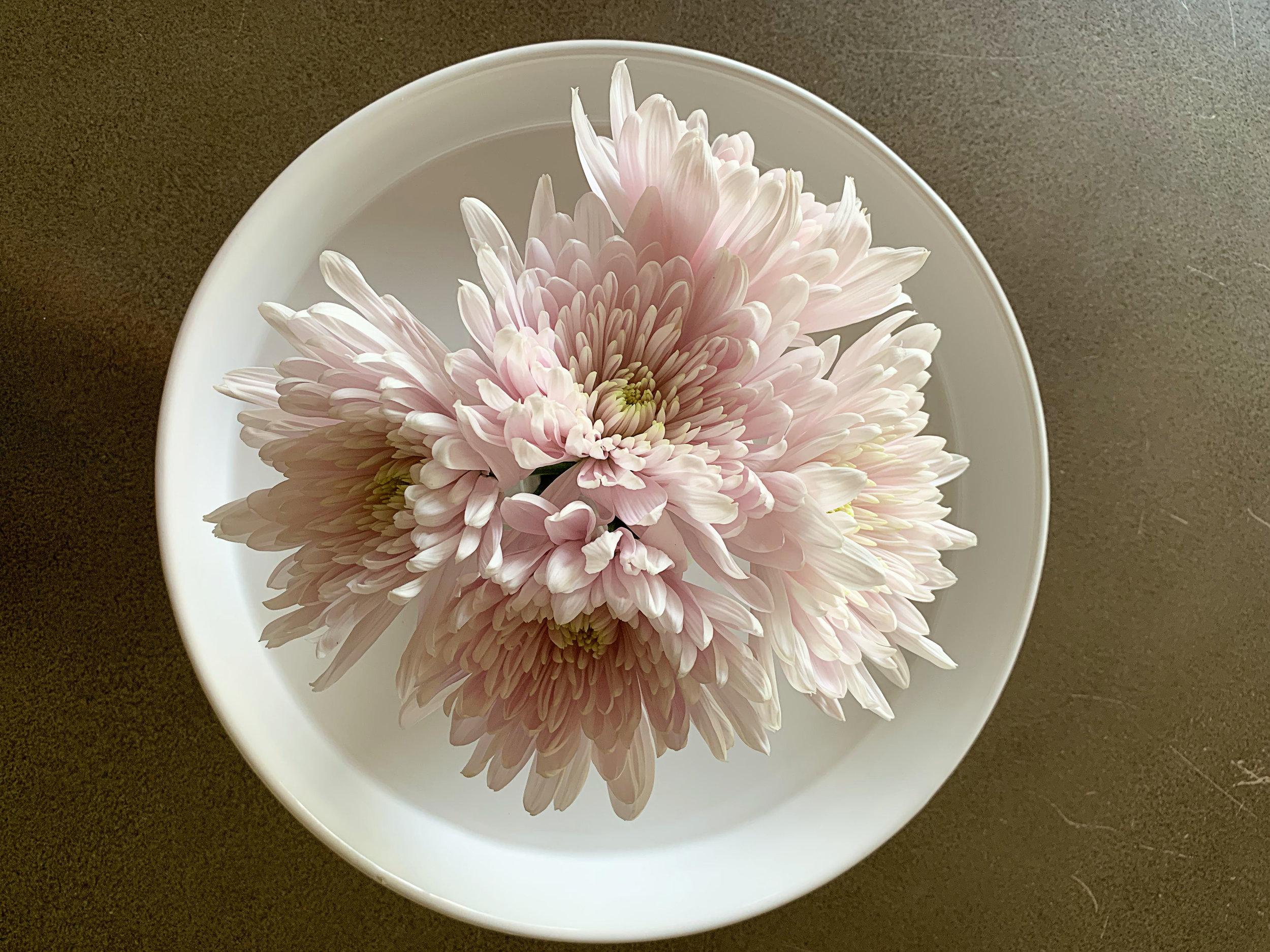 2019 07 24 Flowers 01.jpg