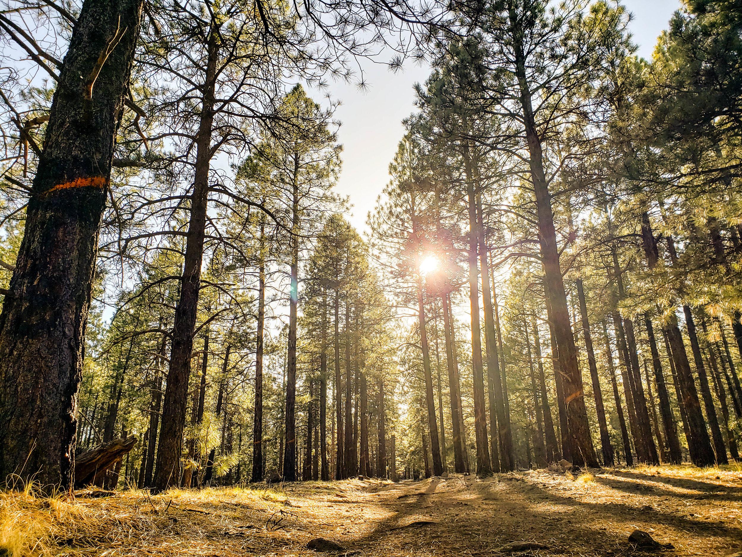 Flagstaff Arizona - Blind Spot Creatives