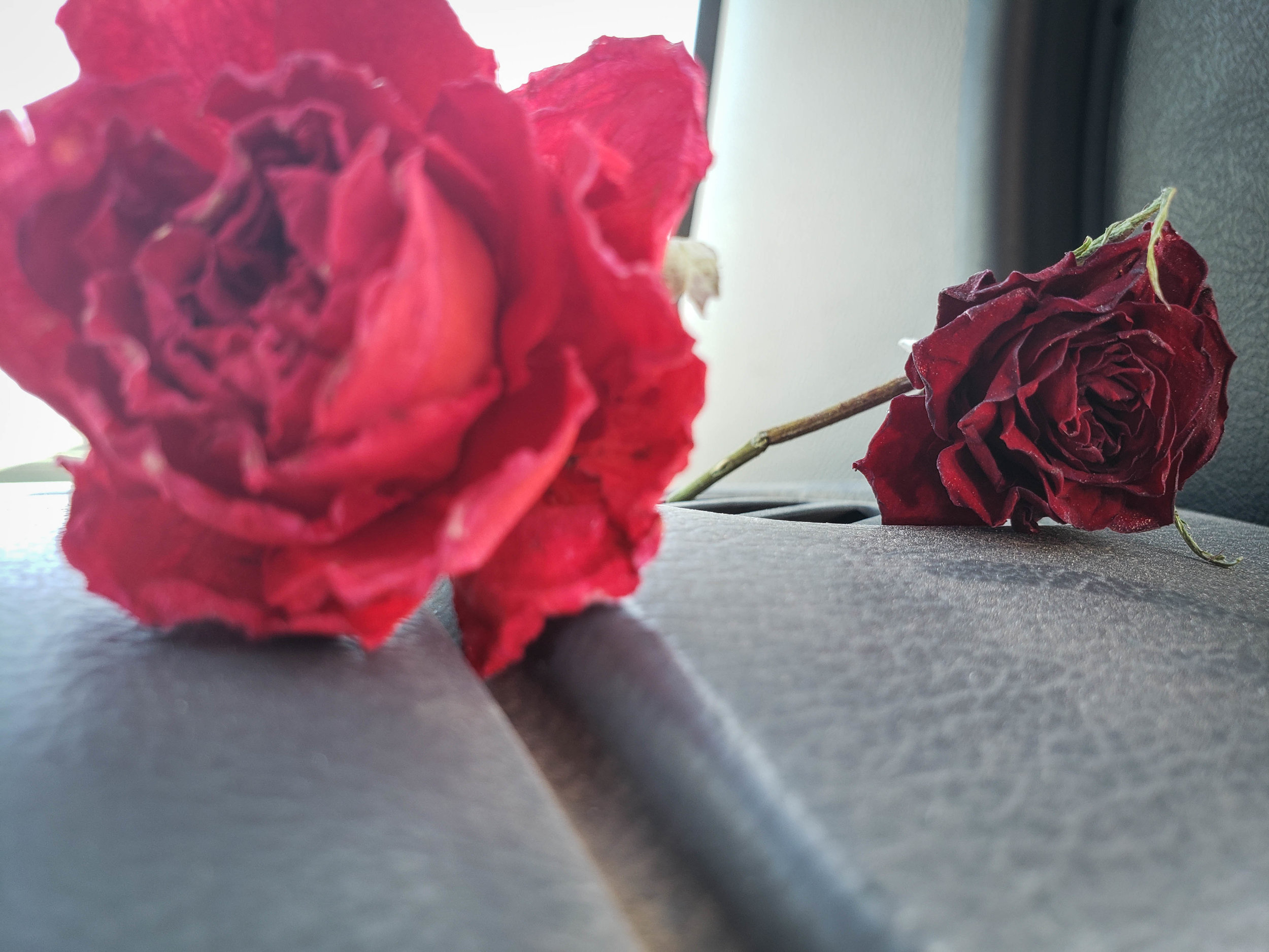 Dead flowers - Blind Spot Creatives