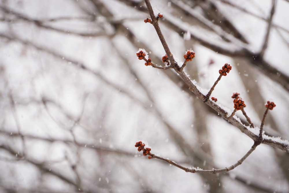 Blind Spot Creatives - Winter Photograph