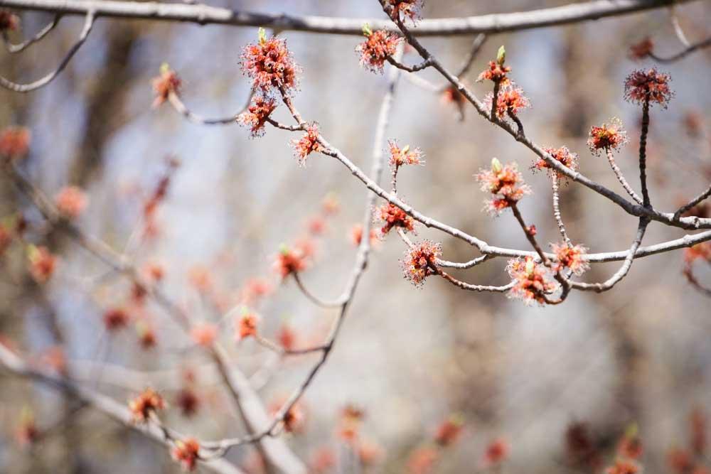 Blind Spot Creatives - Spring