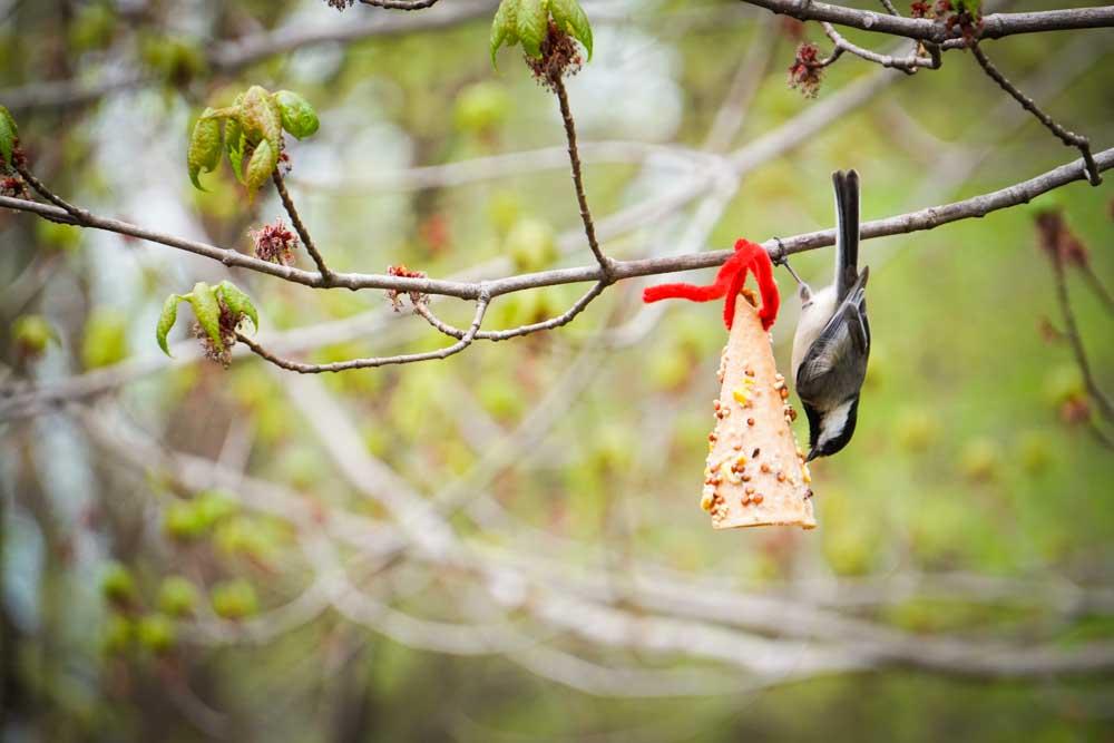Blind Spot Creatives - Spring Photographs