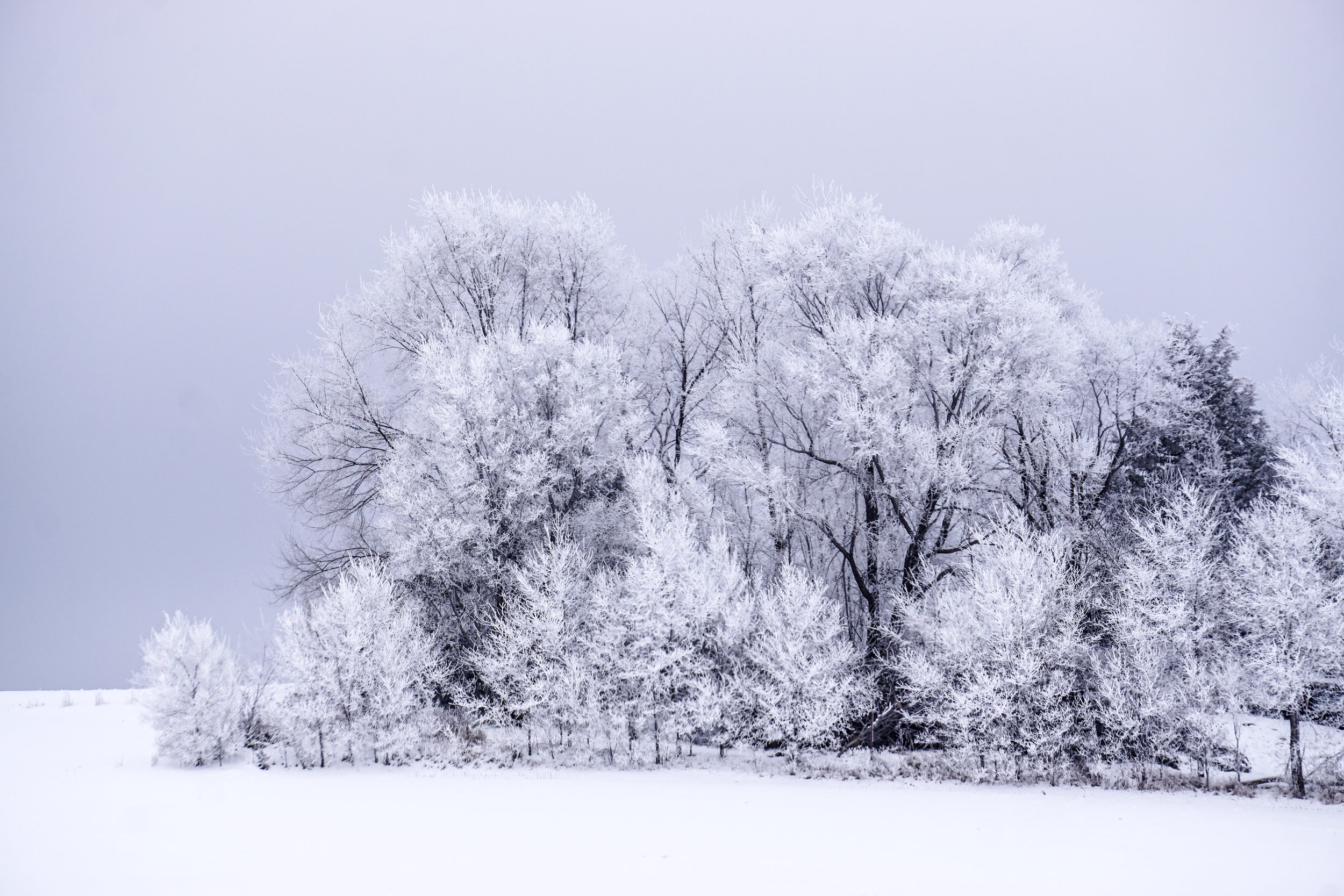 © Blind Spot Creatives - Winter - Minnesota - Photography - Frost