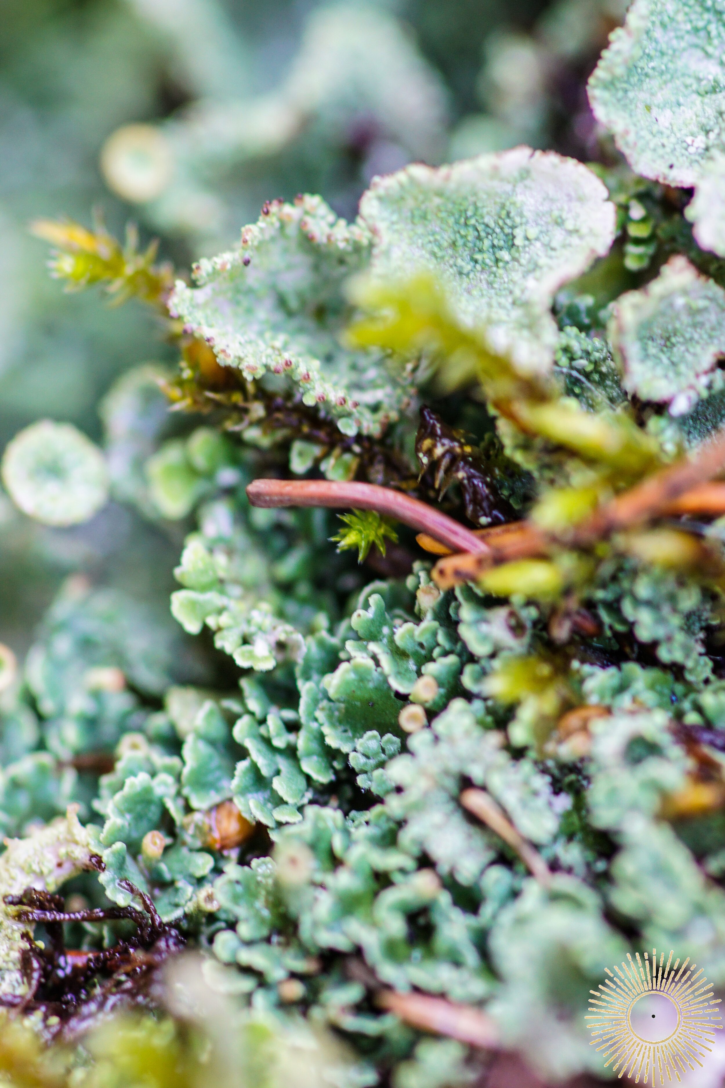 Little Worlds - Micro Photography - Duluth, Minnesota - Alyssa Johnson - Blind Spot Creatives  - Lichen