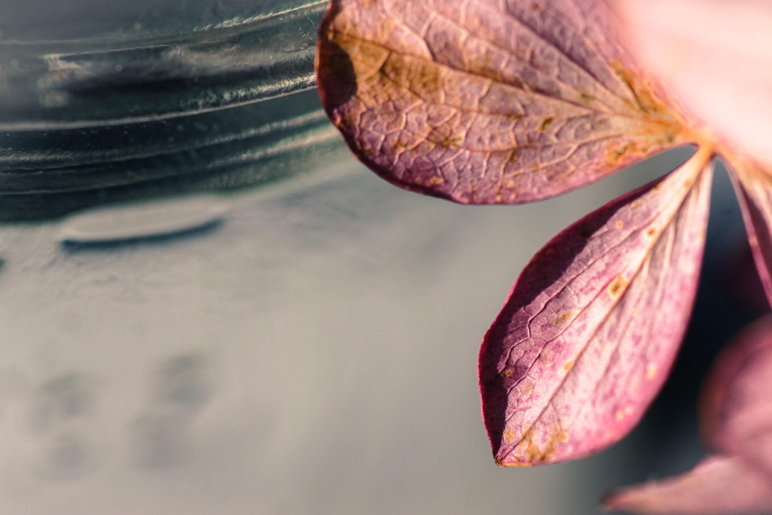 ©Blind Spot Creatives - Alyssa Johnson - Micro Photography - 16.jpg
