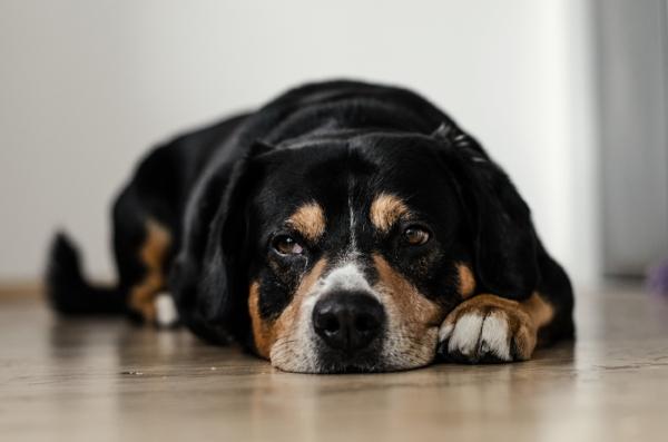 animal pet pain management junction city kansas