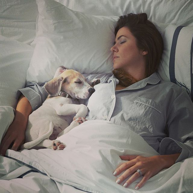 That time when @julie_gonzalo and Henry acted like they were sleeping! #puppy #setlife #puppiesofig #beagle
