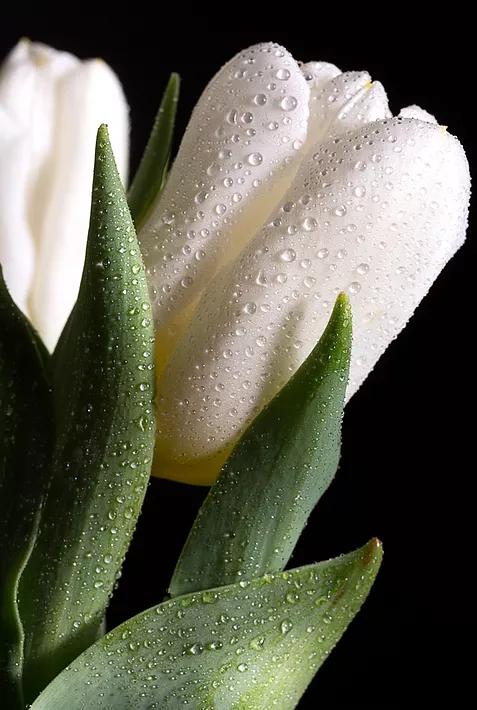 morgan-flower-1