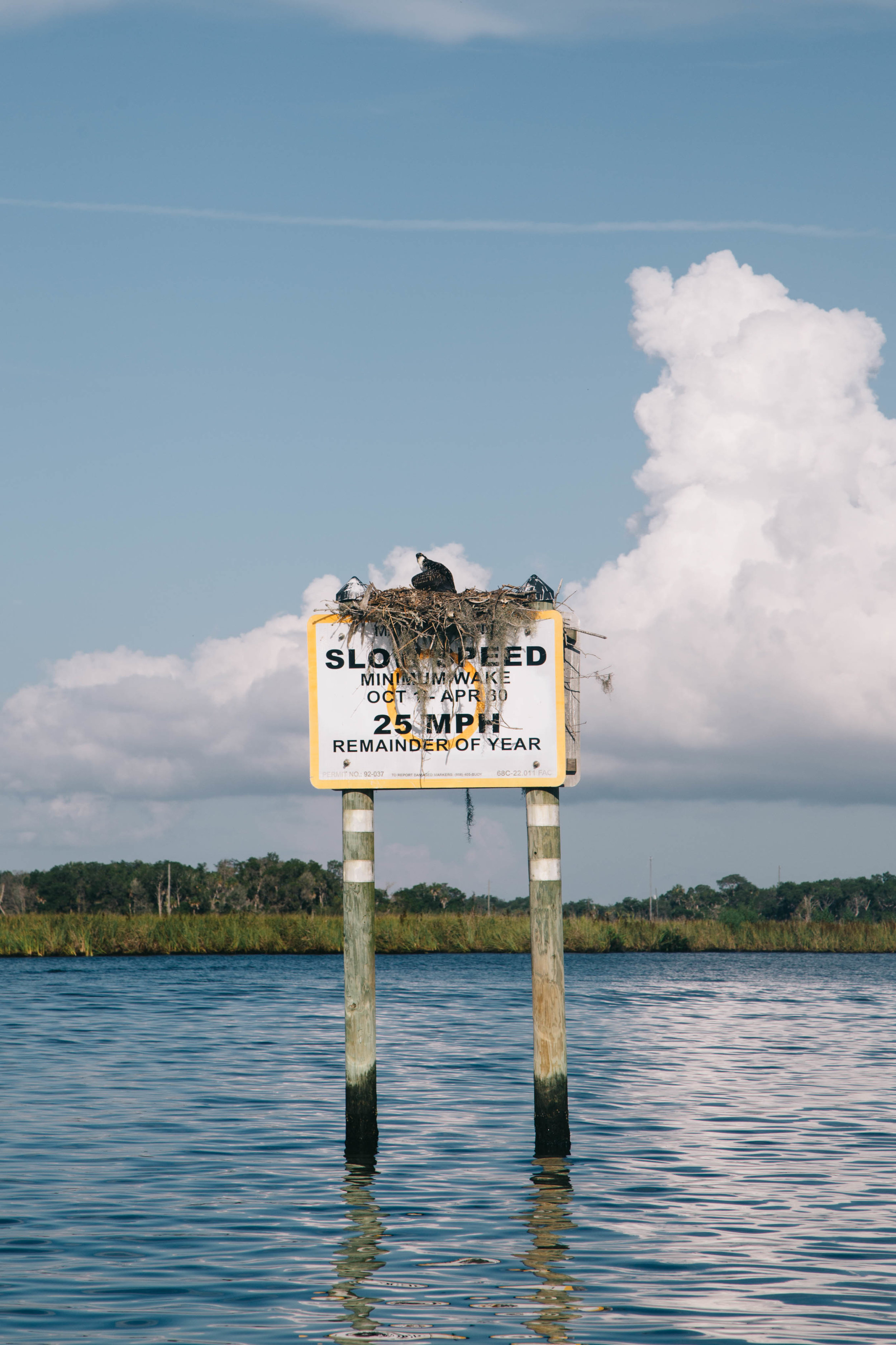 Wildlife can be seen everywhere during the Florida Scallop Season