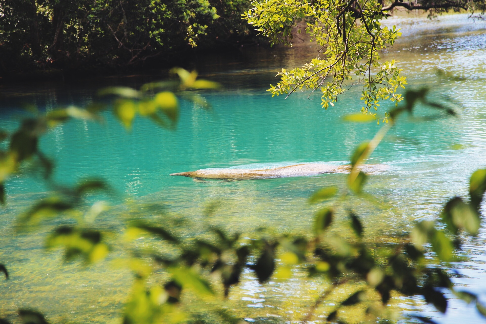 Check out 5 Reasons to Visit Homosassa Springs State Park at MoreDetours.com.