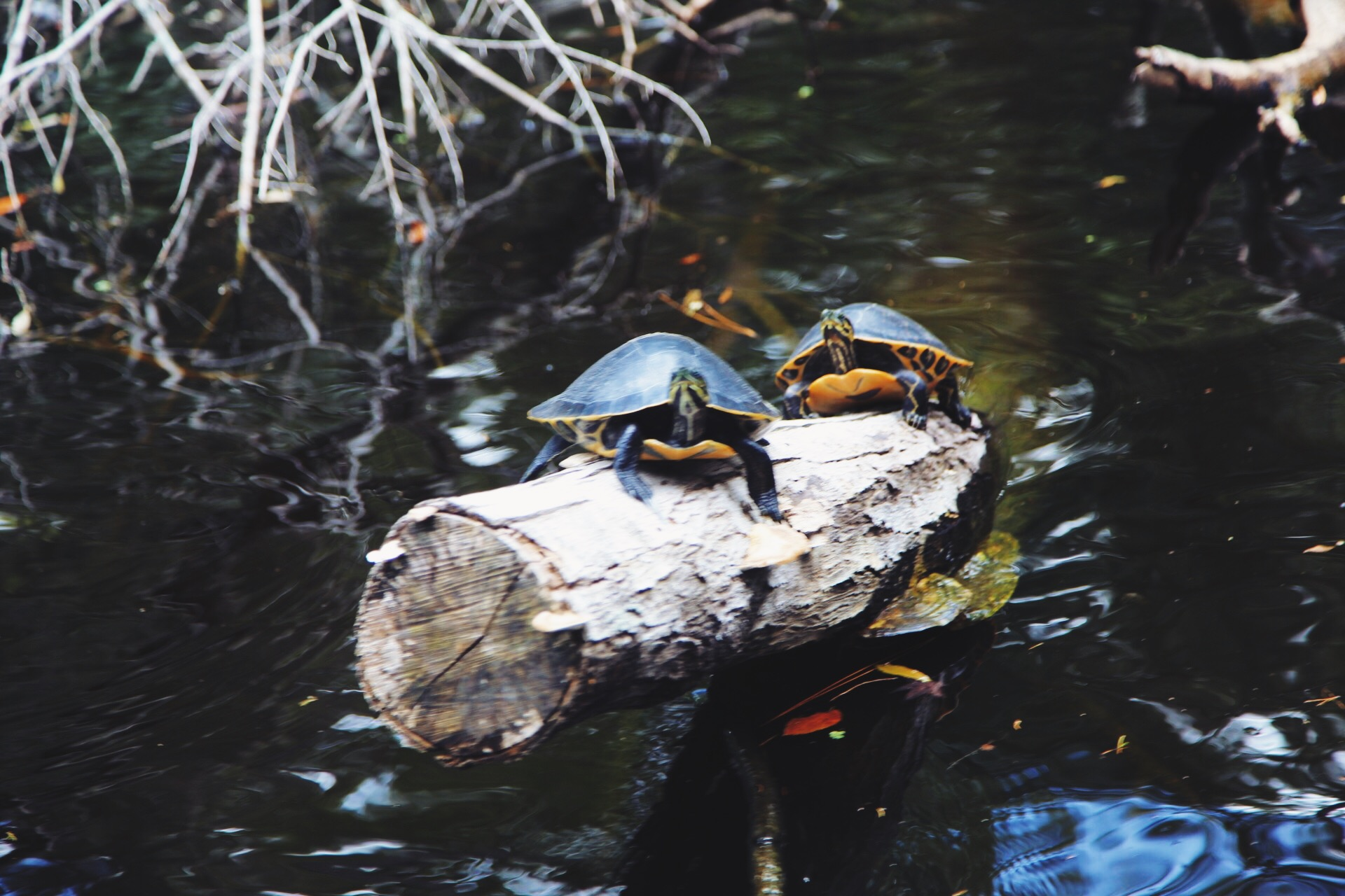 Check out5 Reasons to Visit Homosassa Springs State Park at MoreDetours.com