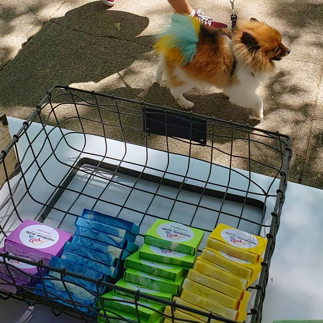 Spotted at Wooster Square Strawberry Days... the new face of RainbowSudsSoap.com?? 😂 🌈🍓🐩🐶🍓🌈 #handmade #charity #rainbow #color #soap #allnatural #essentialoils #soapmaking #vegan #sustainable #sustainability #wedding #weddingfavors #gift #giftideas #dogsofinstagram #cute
